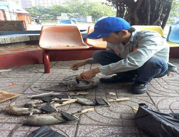 Dịch vụ diệt chuột Thừa Thiên Huế