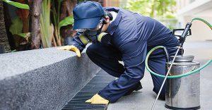 diệt mối tại Thành phố Hồ Chí Minh