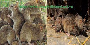 Đơn vị diệt chuột uy tín tỉnh Thái Nguyên