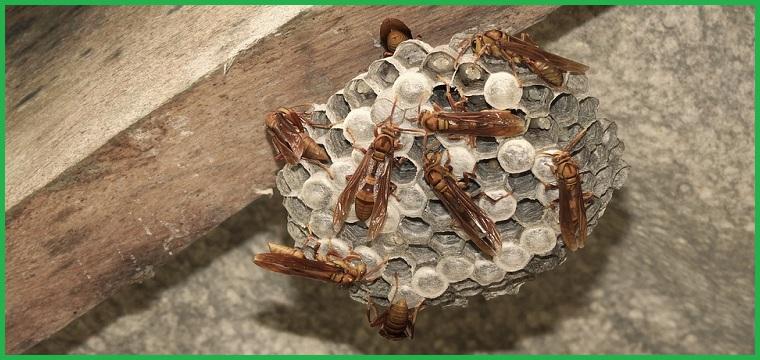Đơn vị bắt tổ ong tại nhà Cần Thơ