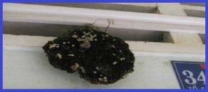 Công ty bắt tổ ong tại nhà Bình Dương