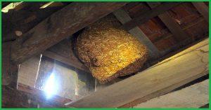 Dịch vụ bắt ong tại nhà TP.HCM