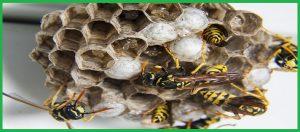 Trung tâm diệt ong tại Đà Nẵng